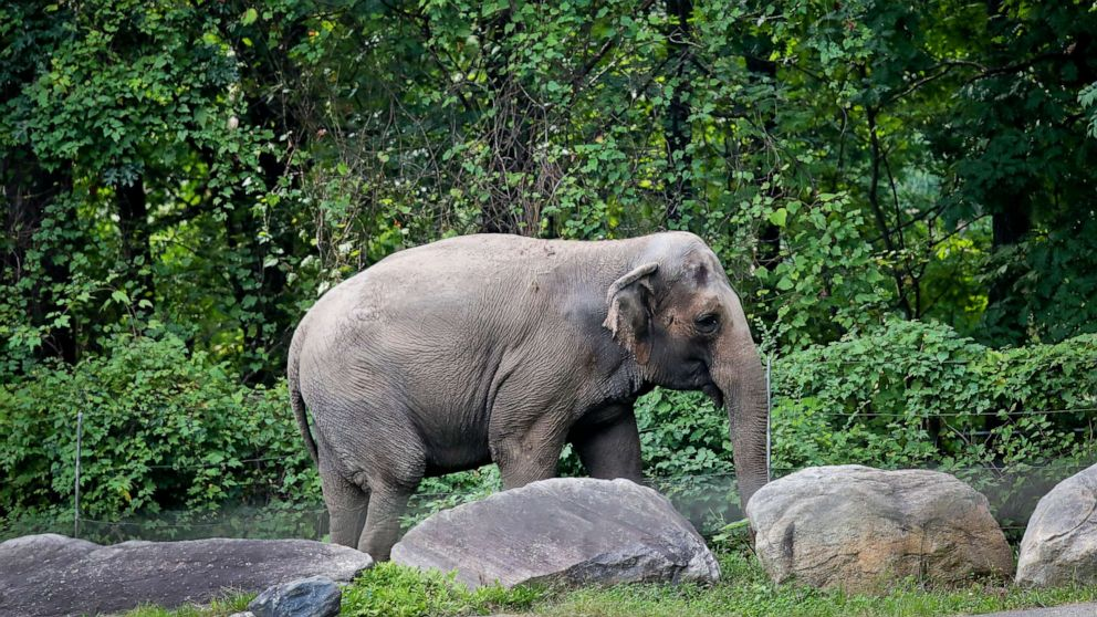Siding with Bronx Zoo, judge rules Happy the elephant is not a person
