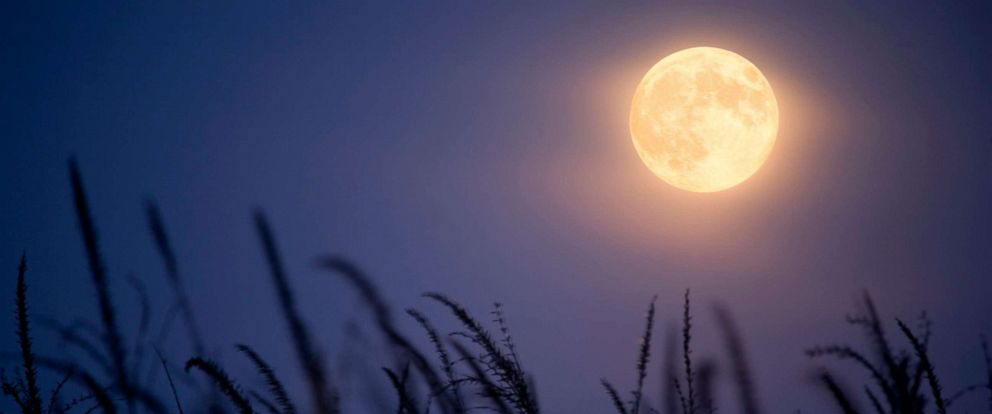 "PHOTO: Full ""Harvest Moon"" and corn stalks."