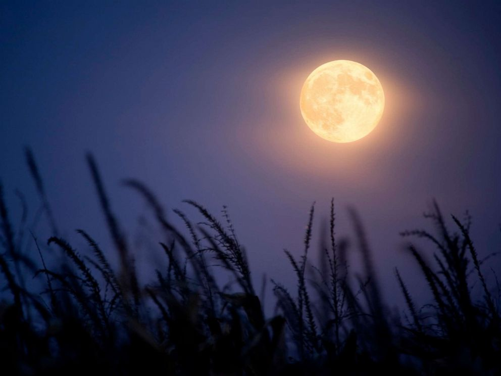 PHOTO: Full Harvest Moon and corn stalks.