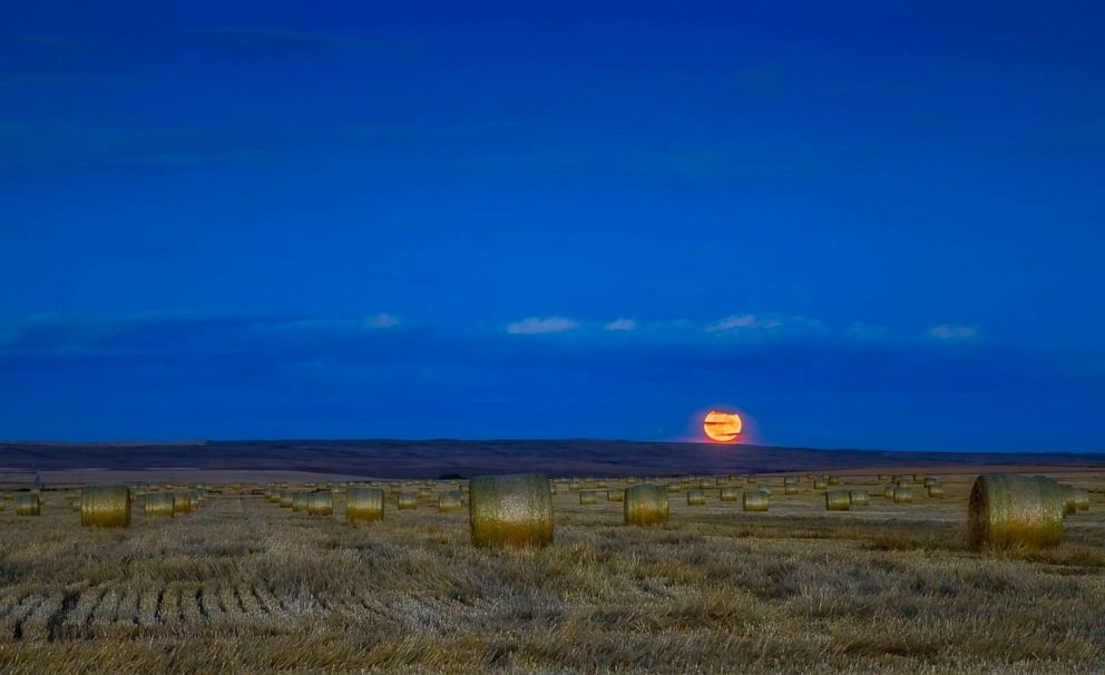 PHOTO:The Harvest Moon is pictured, Sept. 24, 2018, in thin clouds and above a field of hay bales in Alberta, Canada.