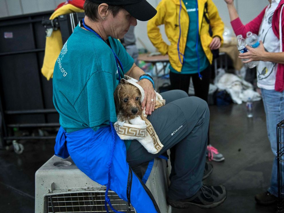 PHOTO: A vet holds a dog at a shelter in the George R. Brown Convention Center during the aftermath of Hurricane Harvey, Aug. 28, 2017, in Houston.