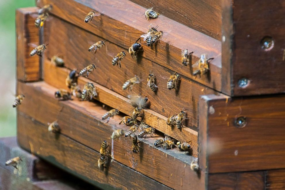 Honeybees are pictured entering a beekeeper's wooden beehive in this undated stock photo.