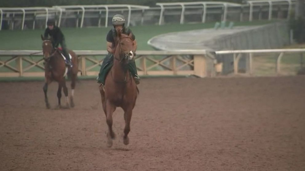 Horses continue to die at Santa Anita track in Arcadia, Calif.