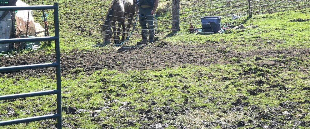 PHOTO: Authorities have seized 34 horses from a property in Lebanon, Oregon, after finding 14 dead there.