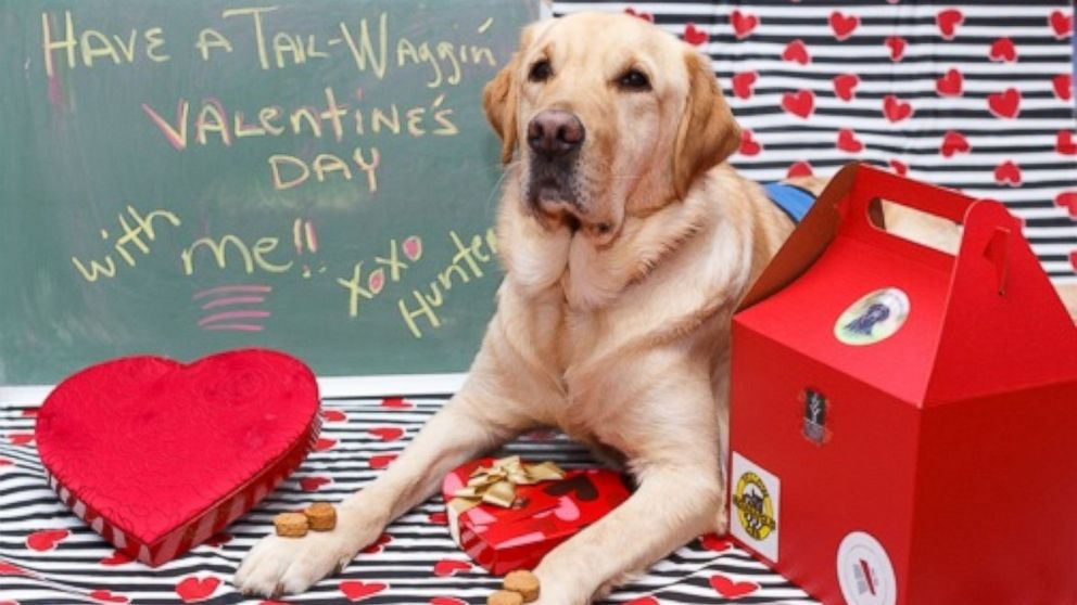 Image result for valentine dogs