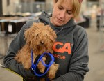 PHOTO: ASPCA urges NYC pet owners to reclaim pets at temporary emergency shelter in Brooklyn.
