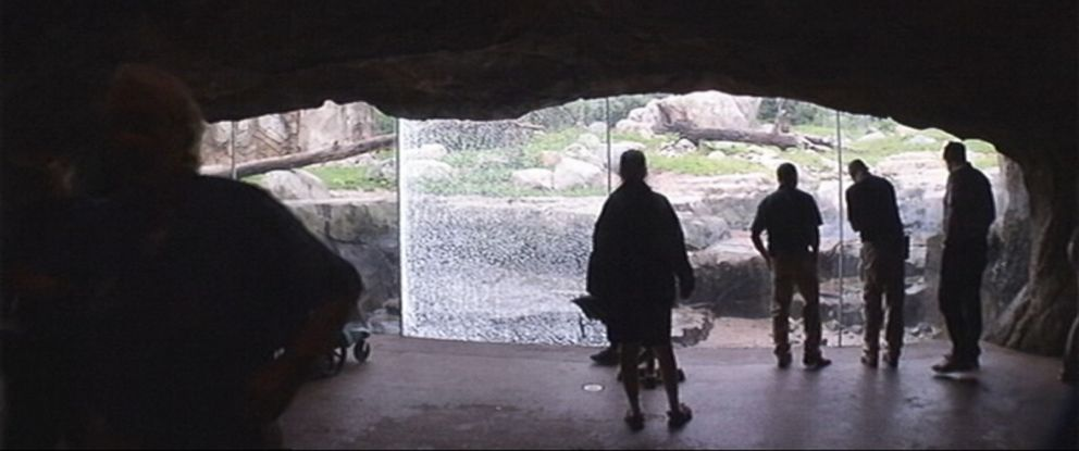 PHOTO: A grizzly bear shattered a window at the Minnesota Zoo on July 6, 2015.