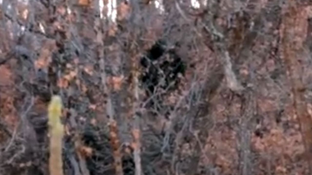 """PHOTO: In a video posted to YouTube on Oct. 30, """"Beard Card,"""" who did not want his name made public, said he was camping with some friends near Squaw Peak and Little Rock Canyon in Provo Canyon, Utah, and initially thought he saw a deer."""