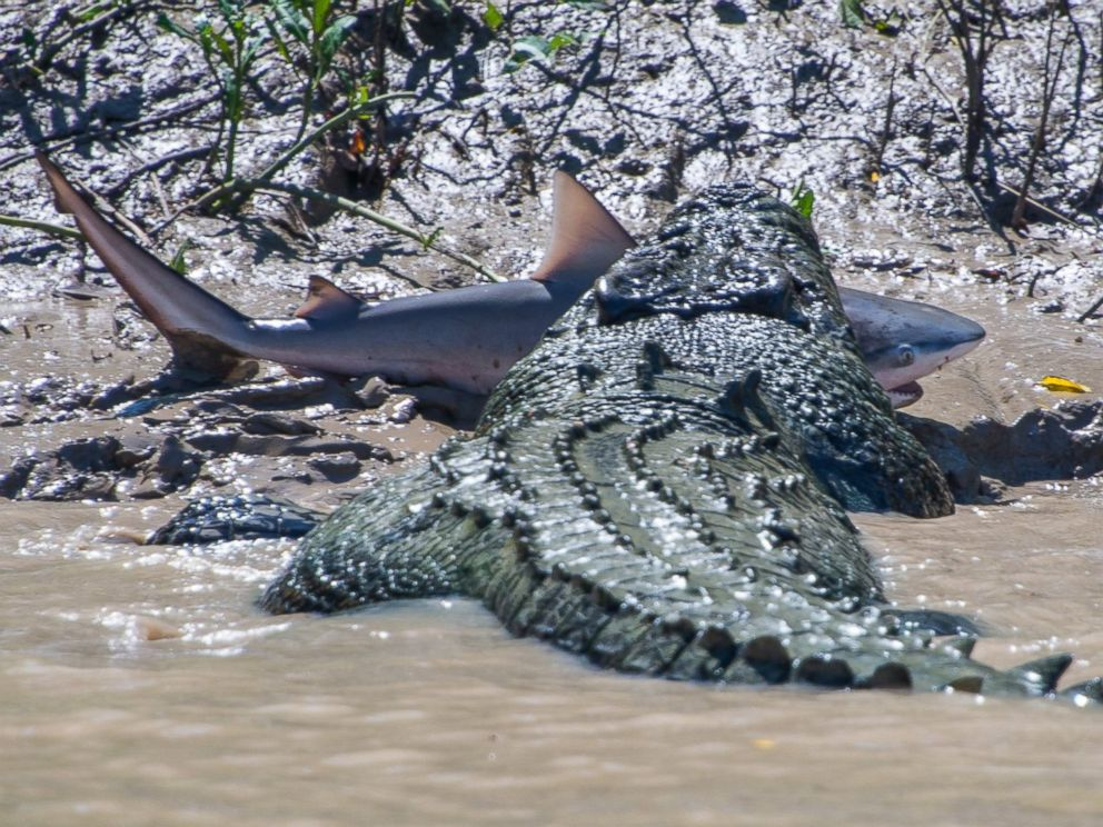 PHOTO: Andrew Paice of Sydney, Australia photographed a crocodile nicknamed Brutus eating a live shark while on Adelaide River cruise on August 5, 2014.