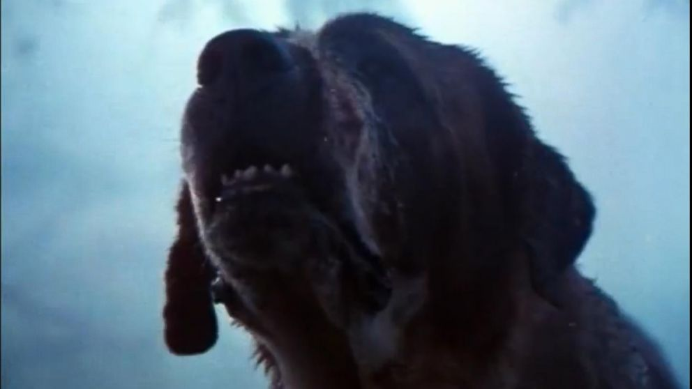 Cujo appears in this screen grab from the Cujo trailer.