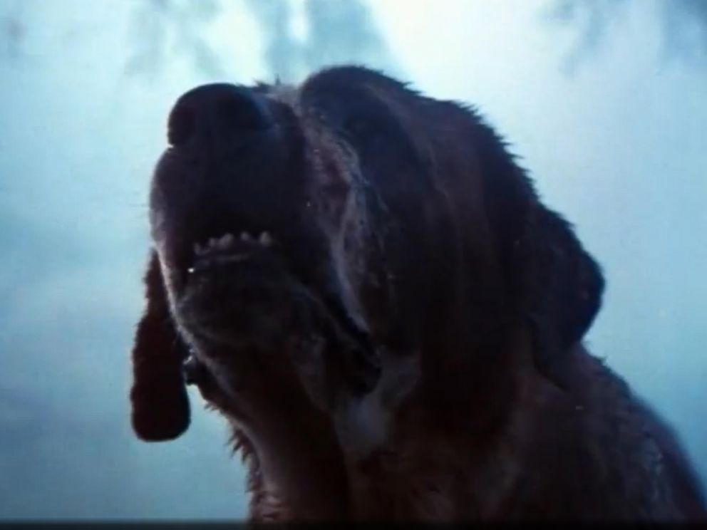 PHOTO: Cujo appears in this screen grab from the Cujo trailer.