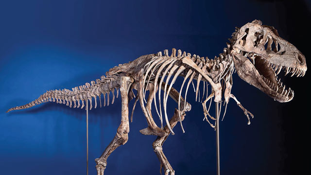 PHOTO: U.S. Immigration and Customs Enforcement returned a Tyrannosaurus Bataar skeleton, looted from the Gobi Desert and illegally smuggled into the United States, to the government of Mongolia, on May 6, 2013, during a repatriation ceremony at a Manhatt