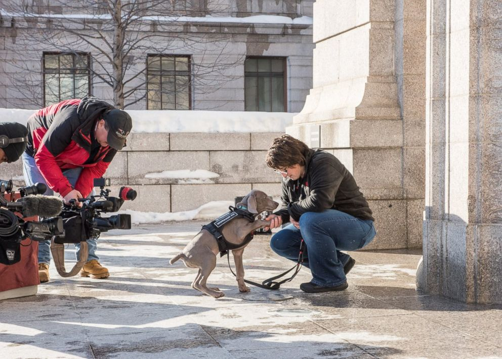Boston's Museum of Fine Arts introduced its newest employee, Riley, a bug-sniffing puppy on Jan. 10, 2018.