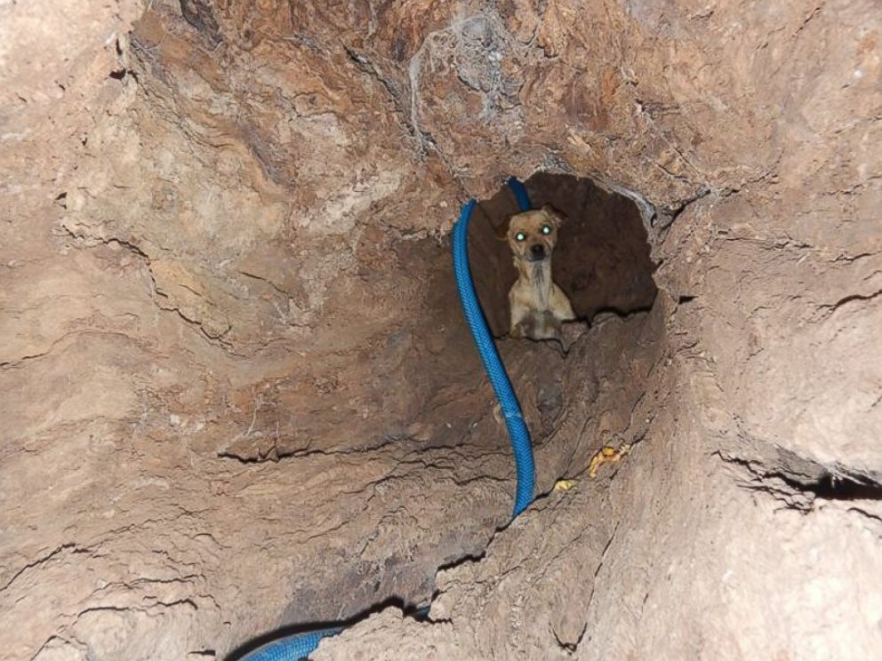 PHOTO: Boo had been living inside the tree pictured here in Sebastopol, California when she was rescued by animal control officers on April 7, 2015.