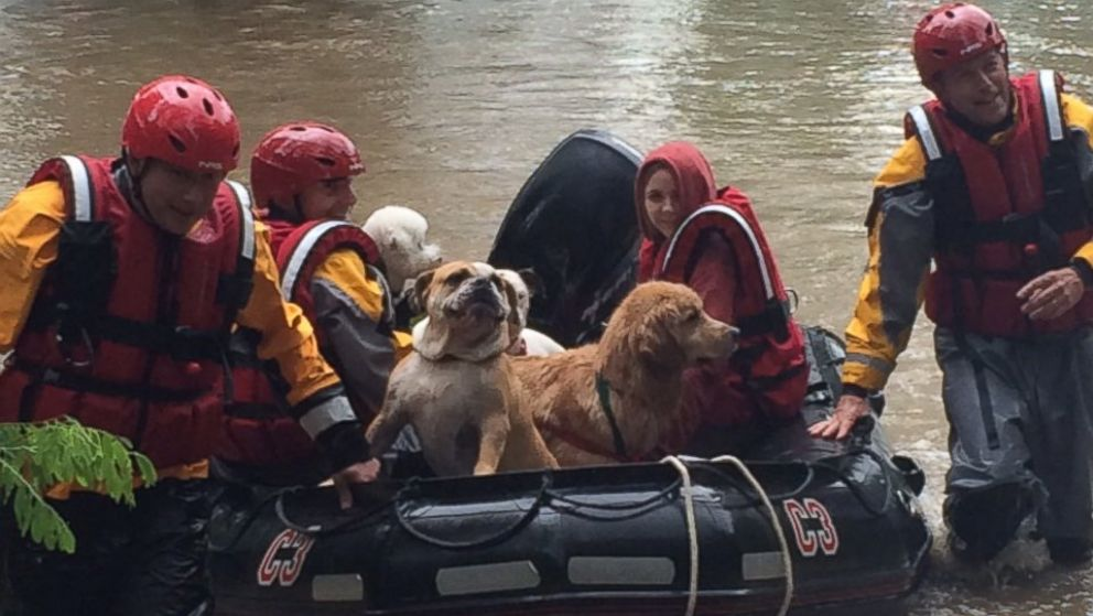Rescue Teams Took Them To Dry Land In Boats