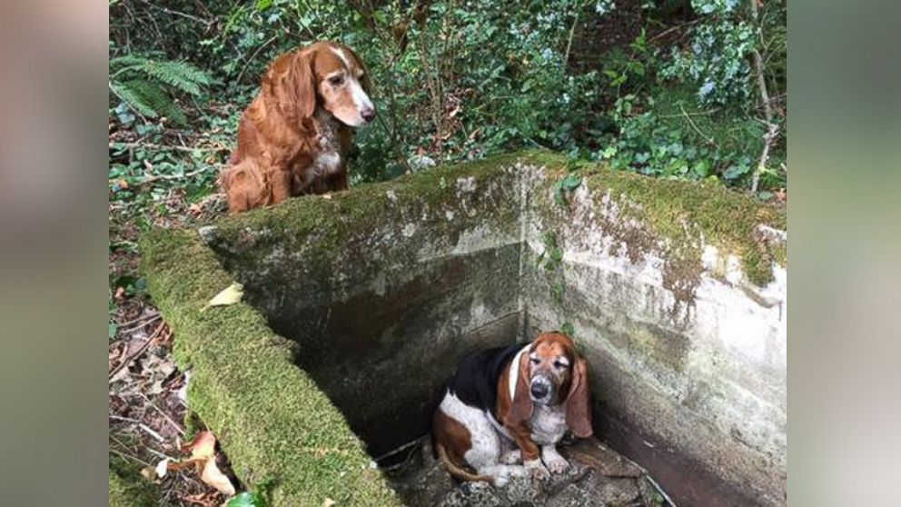 Dog Watches Over Its Trapped 'Best Friend' for a Week After
