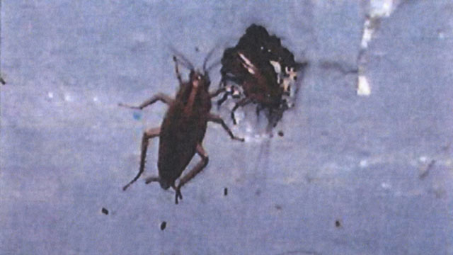 PHOTO: Cockroaches at an airline food facility, captured on camera by FDA inspectors. The image was made available to ABC News via a Freedom of Information Act request.