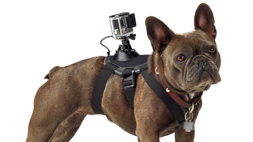 GoPro's $60 Harness Turns Dogs Into Filmmakers - ABC News