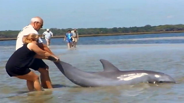 PHOTO: Father and daughter team George Heheman and Kerry Ware rescued a stranded dolphin in Jacksonville, Florida.