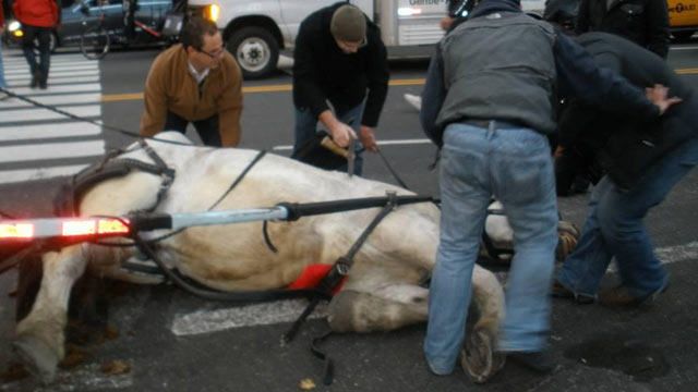 New York City Carriage Horse Falls Near Central Park