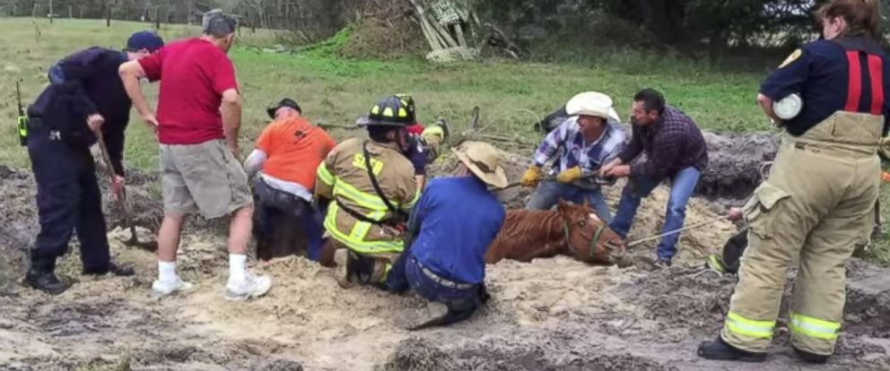 PHOTO: A horse was rescued from a sinkhole in Oxford, Fla. on Dec. 26, 2014.