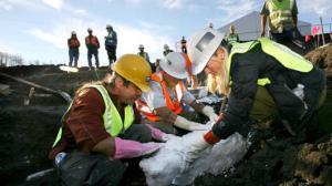 Ice Age Mammals found in Colorado