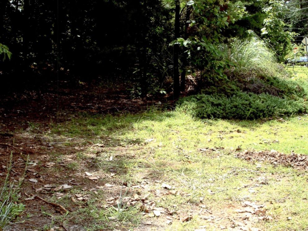 The woods where Nique Leilis body was found covered in dead leaves and branches, located less than a mile from the family home.