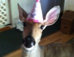 PHOTO: A family has won the fight to keep their pet deer, Lilly, seen here from her blog, www.lillythedeer.com.