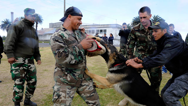 PHOTO:U.S. Navy Chief Master-at-Arms Nick Estrada, second from right, a military working dog handler from Orange, Calif., trains a Uruguayan military working dog.