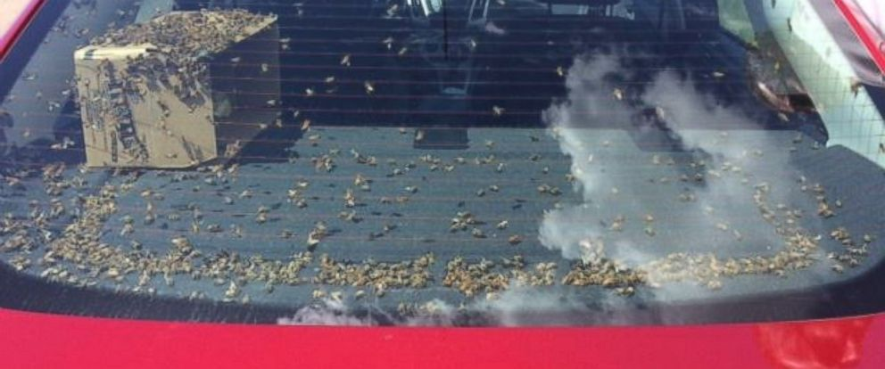 PHOTO: A car filled with thousands of bees was pulled over by Montana Police.
