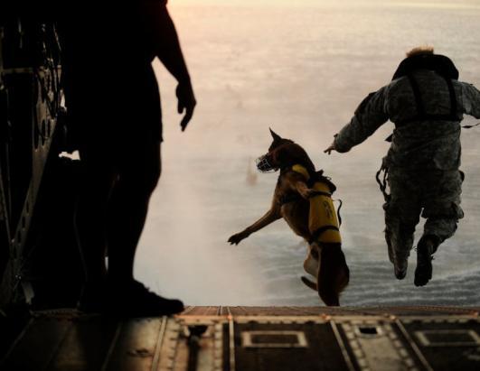 Military Dog Adoptions Soar After Osama Bin Laden Mission Photos