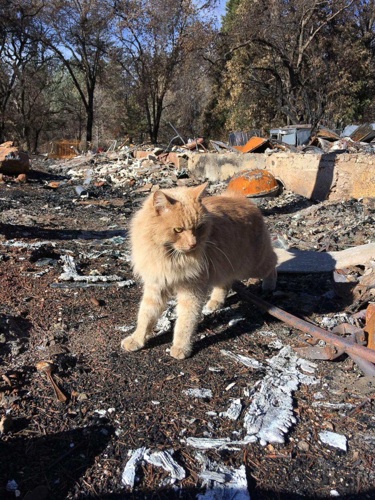 Paradise residents struggle to celebrate holidays after Camp Fire