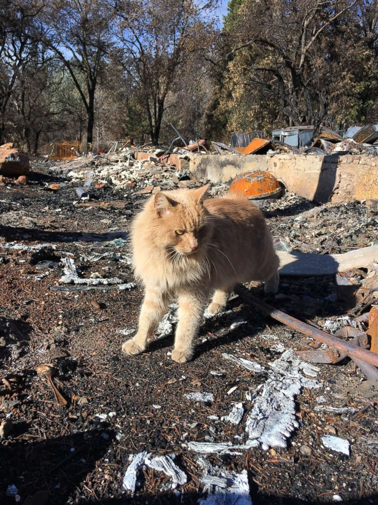 Jim Hoenig found his cat Rusty on Christmas Eve 2018. The cat had gone missing during the Paradise, California, wildfire.