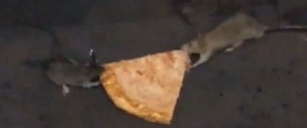 PHOTO: Two rats fought over pizza in a New York subway.