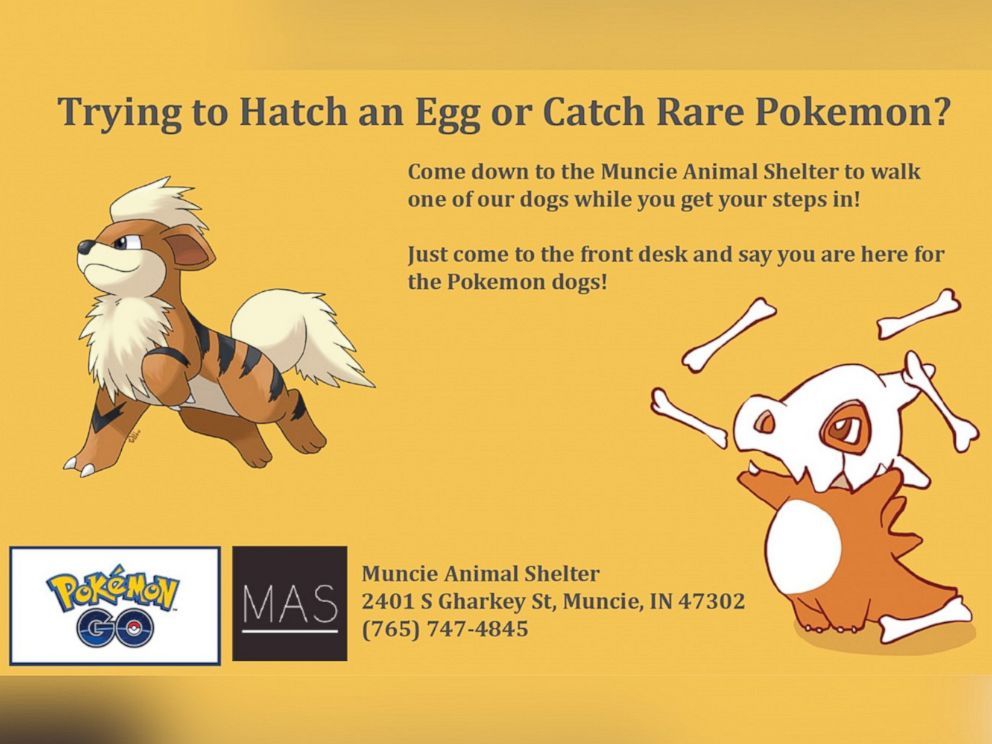 PHOTO: The Muncie Animal Shelter started a volunteer program on July 12, 2016, calling for Pokemon Go players to help walk the shelters dogs.