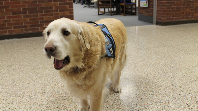 PHOTO: Portage High School in Portage, Ind. honored the schools retiring therapy dog by taking a professional photo of him and publishing it in the class of 2013s yearbook.