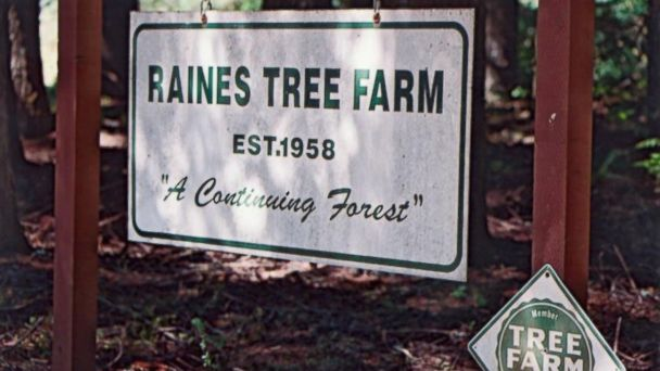 PHOTO: The Raines Tree Farm, planted by Ralph Raines Sr., was the familys source of wealth.