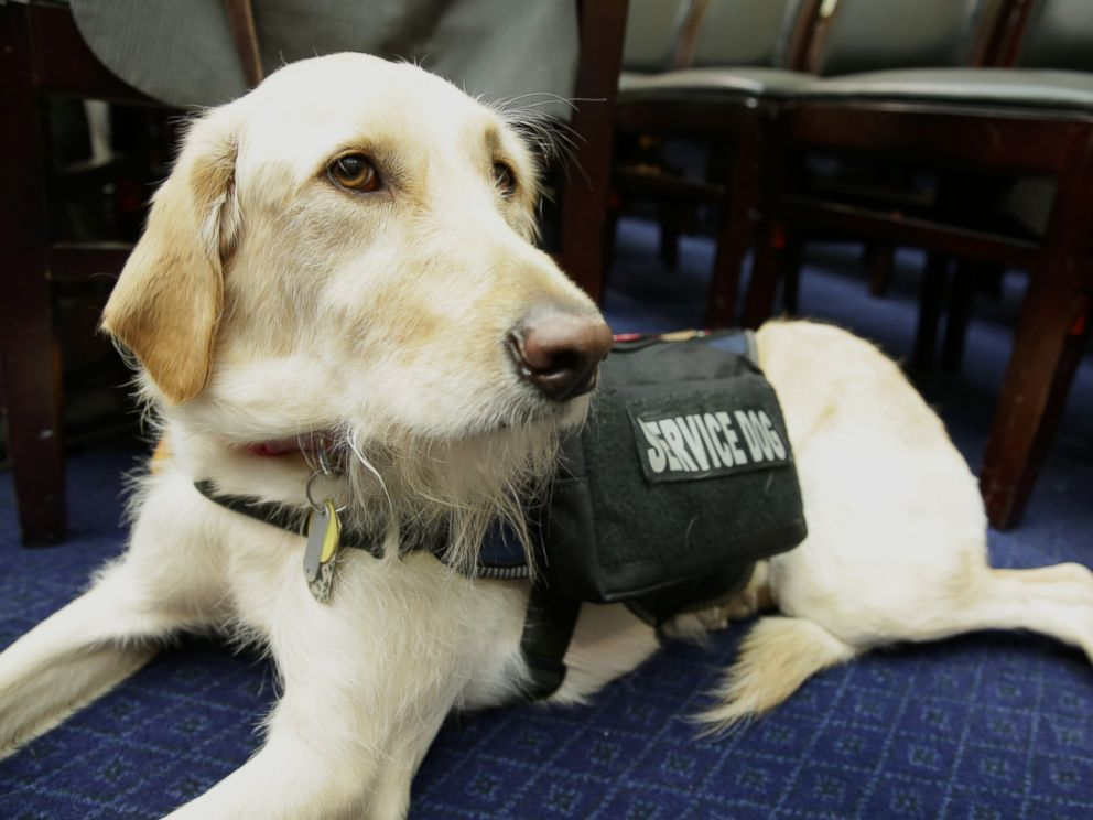 PHOTO: The House Committee on Oversight and Government Reform hears testimony on connecting veterans with PTSD with service dogs, April 14, 2016.