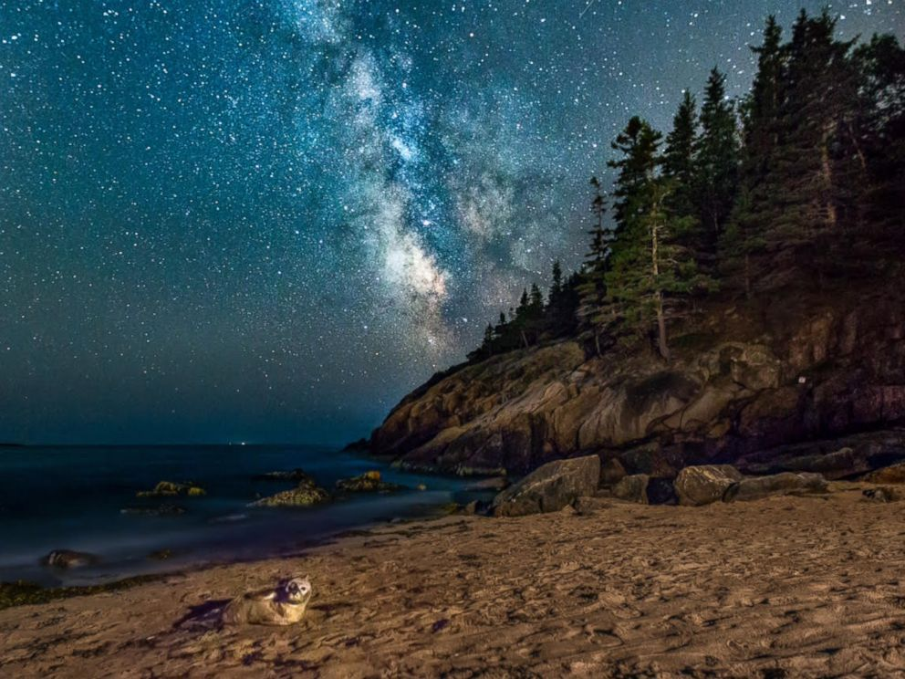 PHOTO: Stephen Ippolito captured a rare moment as a seal poses amidst the Milky Way.