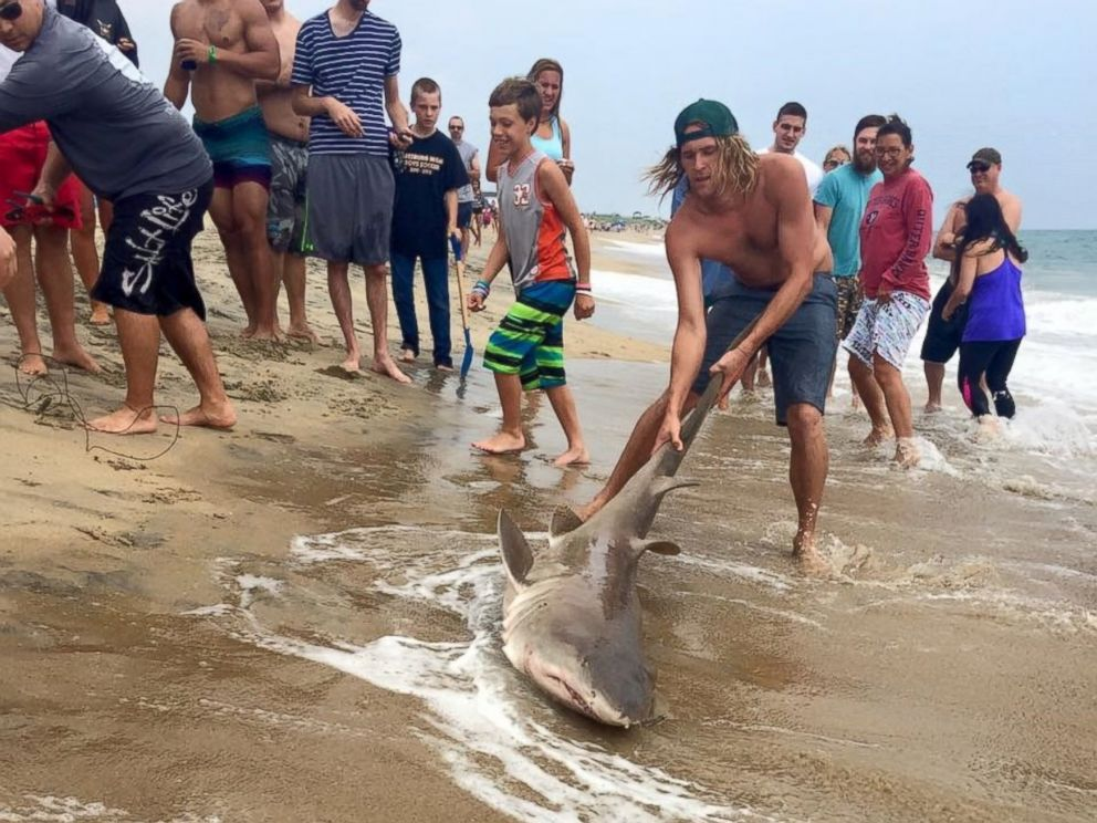 Is Virginia Beach Safe From Sharks
