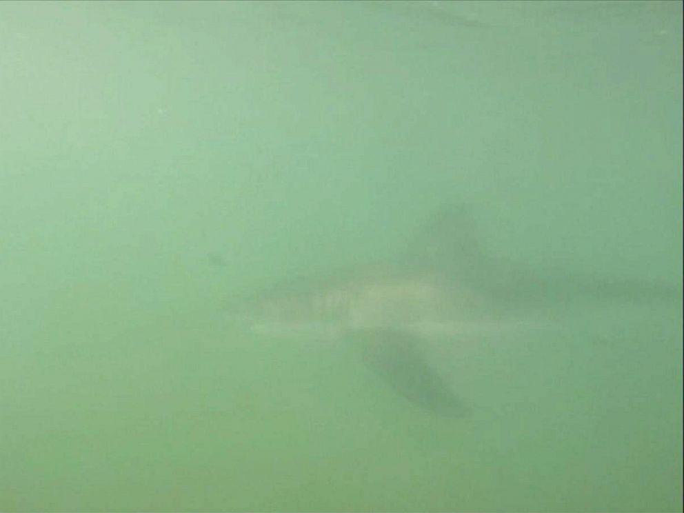 PHOTO: Danny Reid filmed the shark swim under his paddle board in Huntington Beach, California.