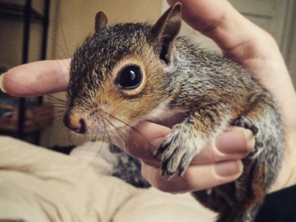 See Photos of a Baby Squirrel Saved From South Carolina