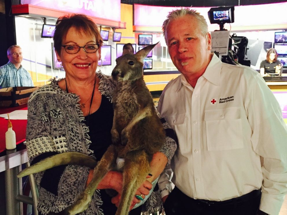 PHOTO: Charlie, the therapy kangaroo featured on local ABC Channel 4 in Salt Lake City, Utah.