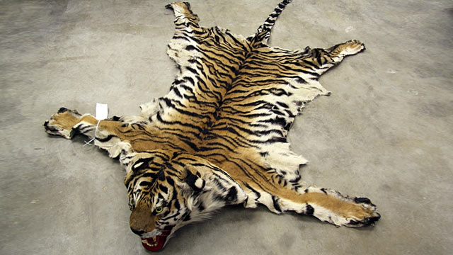 Illegal Animal Product Bust Nets 12 Sellers Abc News