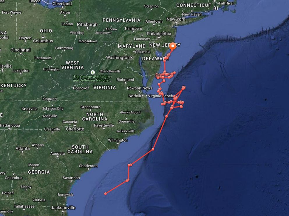 Great white shark with twitter handle tracked along east coast photo a map published by ocearch shows the course of a great white shark named publicscrutiny Gallery