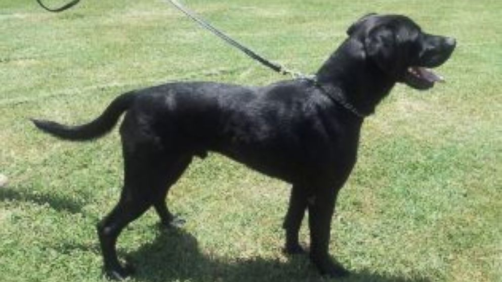 The TSA is looking for homes for working dogs like Bart, Zeno, and Zeux.