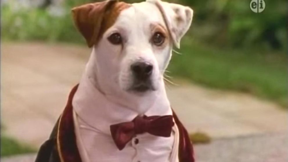 """Wishbone appears in this screen grab from Wishbone's Season 1 Episode 23 """"Bark to the Future."""""""