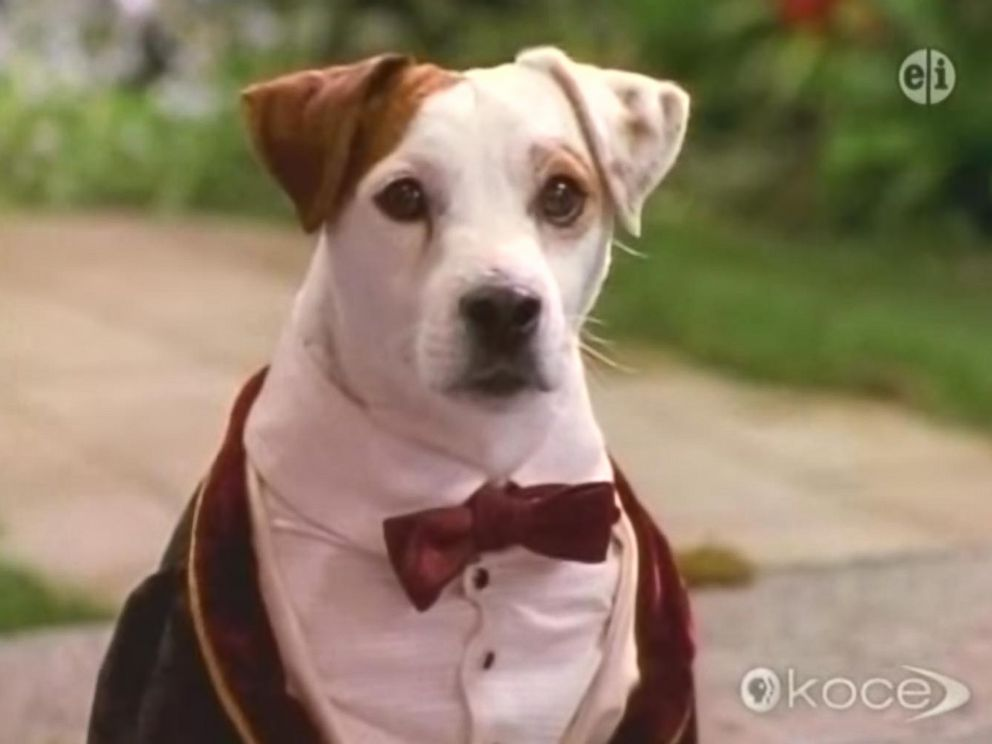 PHOTO: Wishbone appears in this screen grab from Wishbones Season 1 Episode 23 Bark to the Future.