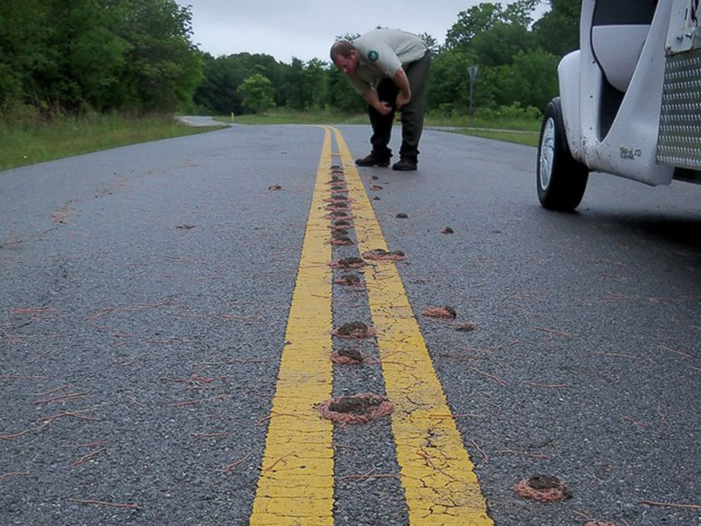 PHOTO: Bunches of worms clump together on a road at Eisenhower State Park in Denison, Texas after heavy rains in a photo released by park rangers on May 29, 2015.