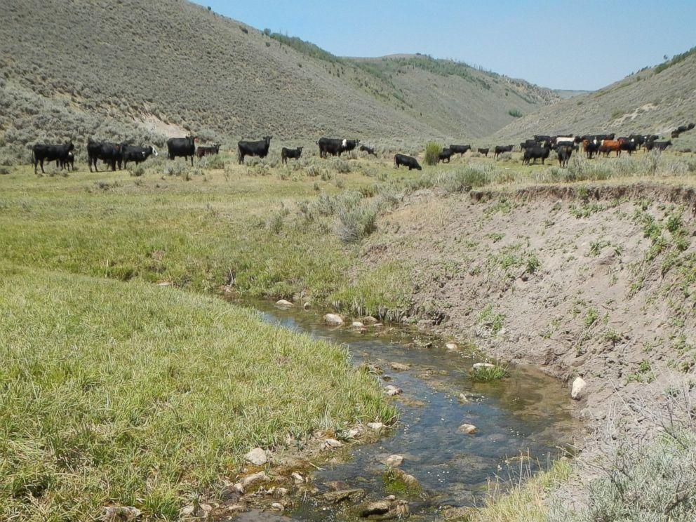 PHOTO: A 2012 photo taken by a citizen scientist shows cattle grazing near a public stream.